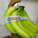 Bunch of bananas, bound & hanged