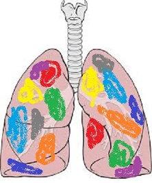 The lungs of a color runner.